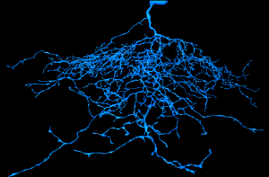 J Cell, EyeWire, neuron, 3D, Seung Lab, MIT Neuroscience
