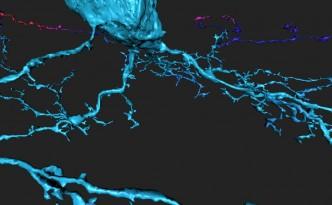 EyeWire neuron branches, EyeWire, neuron
