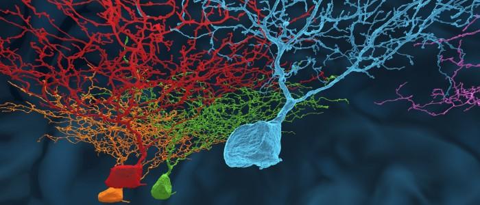 EyeWire Neurons HD